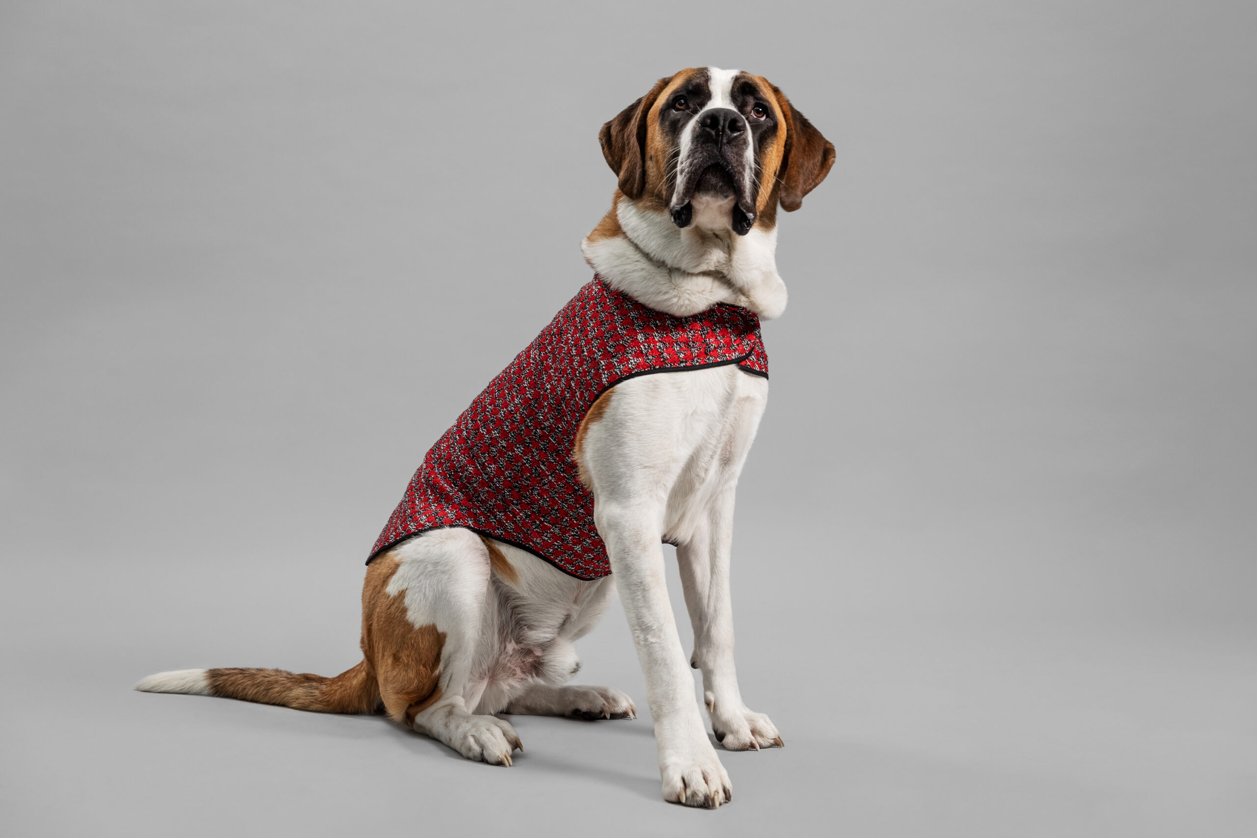 OUI_Holiday-Dog-Sweater_Biggy40