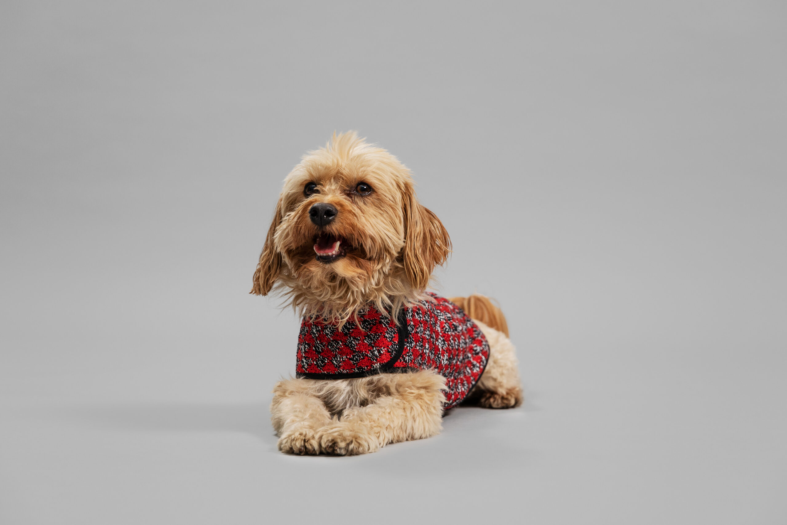 OUI_Holiday-Dog-Sweater_Bodhi_68