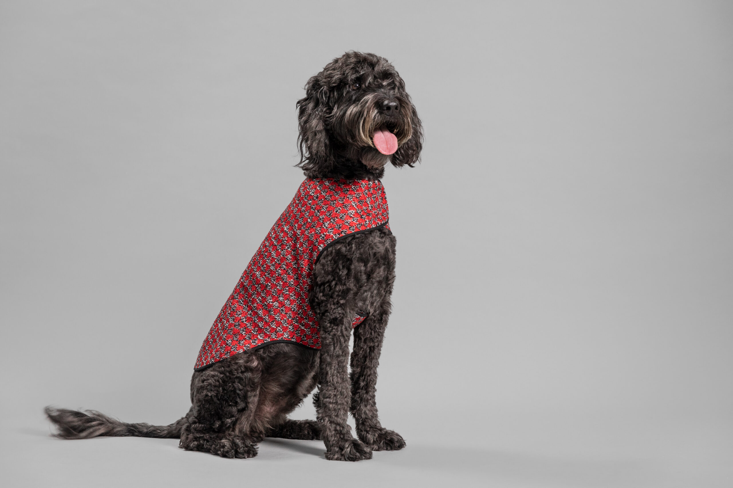 OUI_Holiday-Dog-Sweater_Charley_80