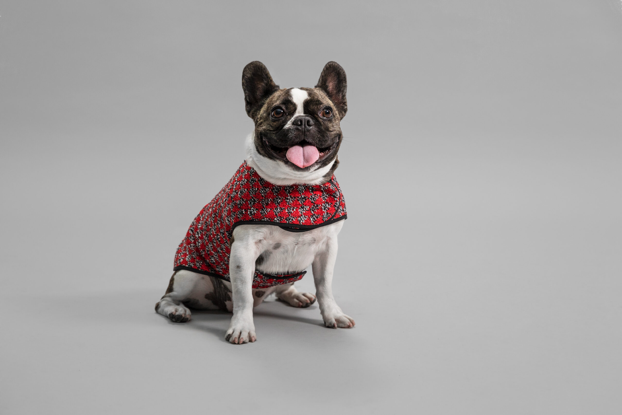 OUI_Holiday-Dog-Sweater_Mrs-Jones_14