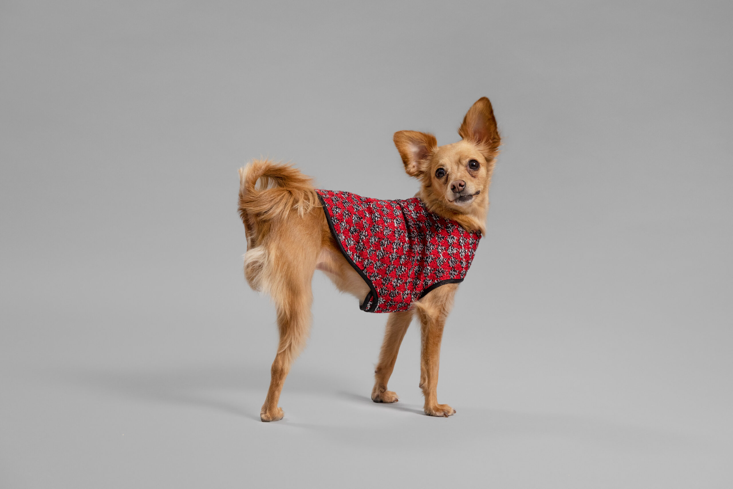 OUI_Holiday-Dog-Sweater_Nina_2