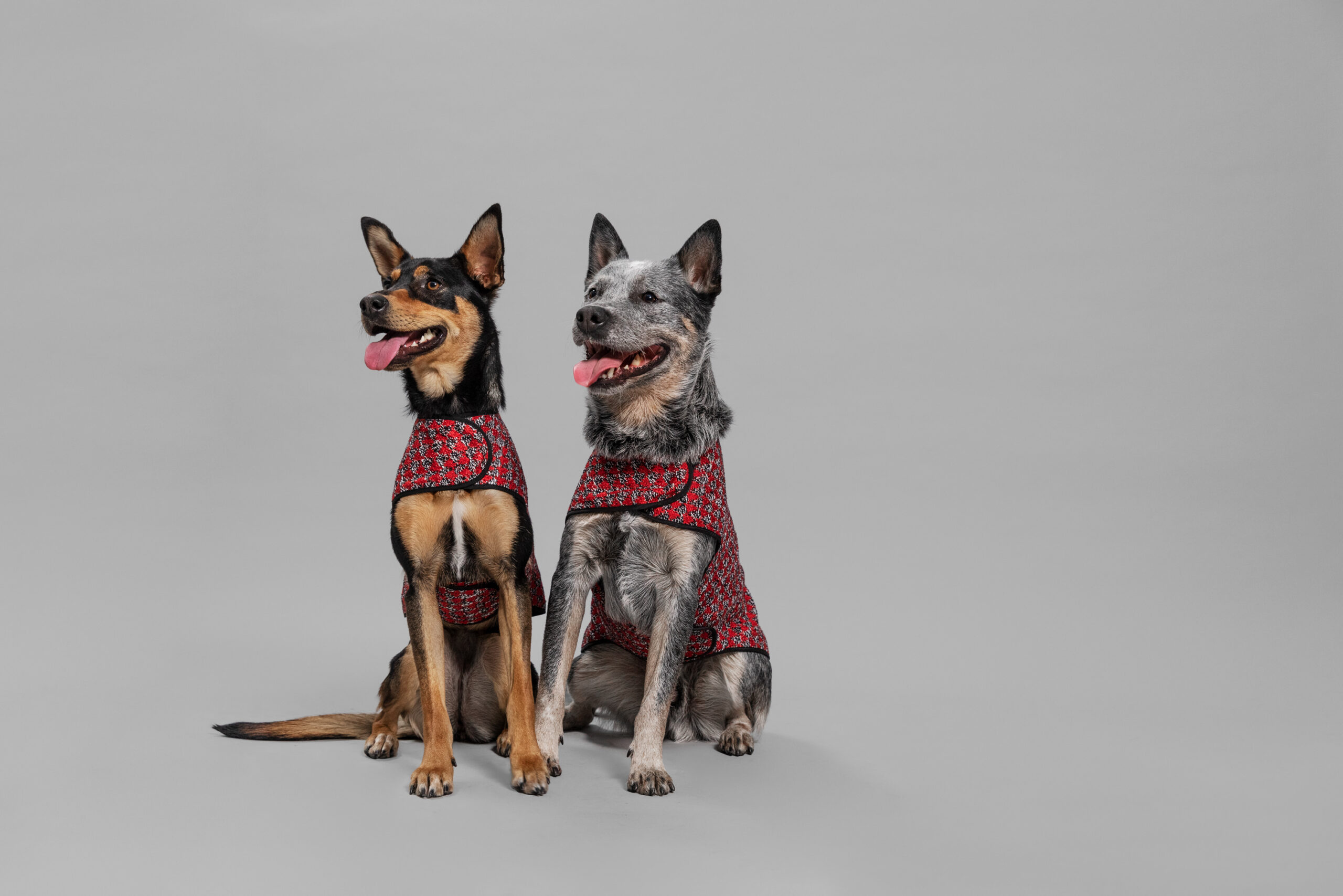 OUI_Holiday-Dog-Sweater_Shaman_113